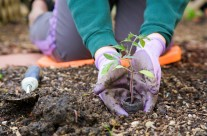 Ready to Plant Your Garden?