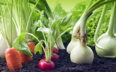 6 Steps for Growing Your Own Organic Food